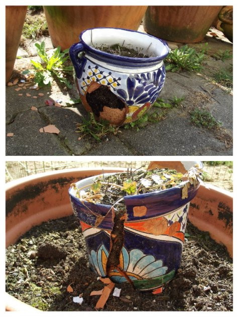 Burst Herb pots