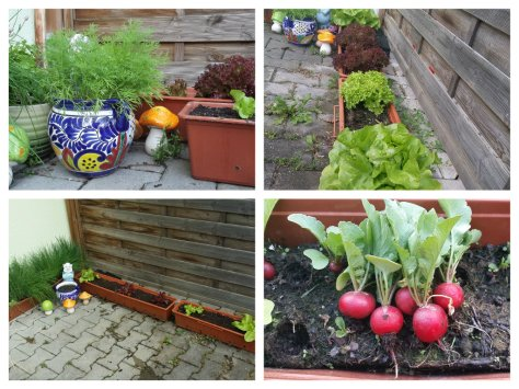 Salad Garden 2014